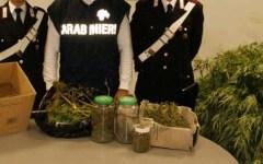 I carabinieri sentono l'odore della marijuana, un uomo la nascondeva vicino alla caserma