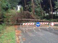 Caduta di alberi in varie zone della Toscana per il forte vento