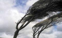Autostrada A11: albero cade sulla carreggiata per il vento. 3 km di coda fra Lucca e Capannori