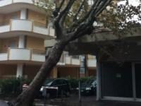 Danni per gli alberi caduti a causa del forte vento