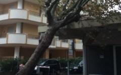 Firenze, allerta meteo: vento forte fino a 80 Km all'ora