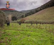 Le ricerche dei carabinieri nei boschi di Gavorrano