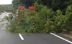 Maltempo, alberi caduti sulle strade
