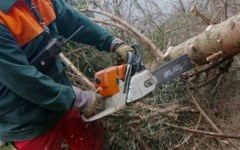 Incidente sul lavoro, muore boscaiolo