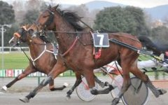 Camorra, sequestrati in Toscana yacht e cavalli da corsa