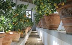 Firenze, apre la Limonaia del Giardino di Boboli