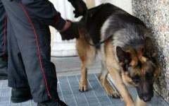 Firenze, allarme droga anche se calano le sospensioni di patenti