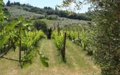 Enoturismo, Firenze tra le 10 capitali mondiali del vino attira sempre più giovani