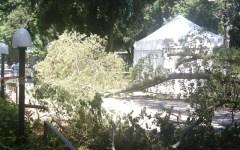 Firenze, Cascine: albero di 12 metri cade vicino a un passante. Nel 2014 un ramo uccise zia e nipotina