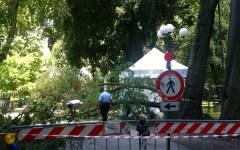 Firenze, è omicidio colposo la morte della donna schiacciata dal ramo alle Cascine