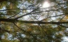 Livorno, cade ramo da un pino e ferisce due donne