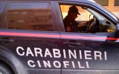 Prato: Rocco e Denver, carabinieri cinofili, scoprono un chilo di cocaina