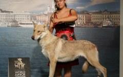 Mondiale 2014 per cani, il campione è di Signa: «Hope for the future di Fossombrone»