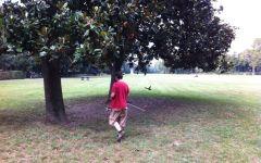 Firenze: Cascine, in vista di Expo rurale 2014 c'è la messa in sicurezza degli alberi