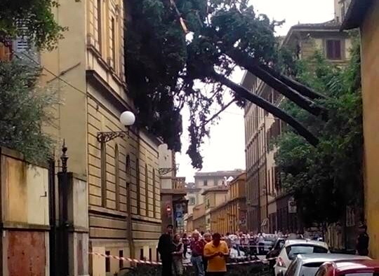 Nubifragio a Firenze: albero caduto in via Bonifacio Lupi