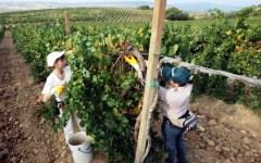 Toscana, fare impresa in agricoltura: boom di domande dai giovani