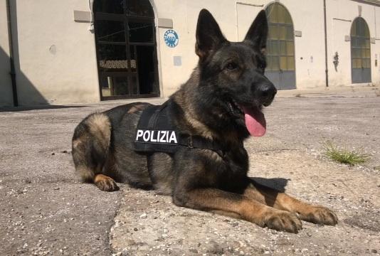 Amper, cane poliziotto antidroga