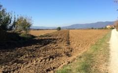 Fisco: Imu agricola 2014. Entro il 31 marzo 2015 è ancora possibile pagarla senza sanzioni