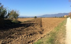 Imu agricola 2014: il pagamento slitta al 10 febbraio 2015. Governo costretto al rinvio dai ricorsi al Tar del Lazio