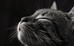 Viareggio: uccide il gatto per sbaglio. Colta da malore e ricoverata all'ospedale Versilia