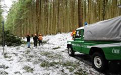 Vallombrosa, uragano del 5 marzo: sono 20 mila gli alberi sradicati