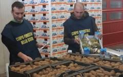 Firenze e Livorno, maxi sequestro di false patate «Bolgheri» e ortaggi contraffatti