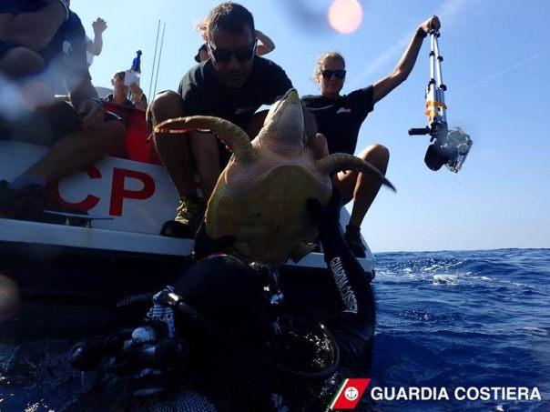 Il momento della liberazione della tartaruga marina