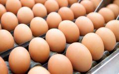 Orbetello: sequestrate 250 uova a rischio fipronil. I controlli della Regione