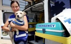 Toscana, soccorso animali: arriva il numero unico per tutta la regione