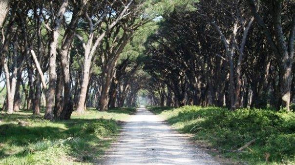 Parco di San Rossore, tenuta regionale della Toscana