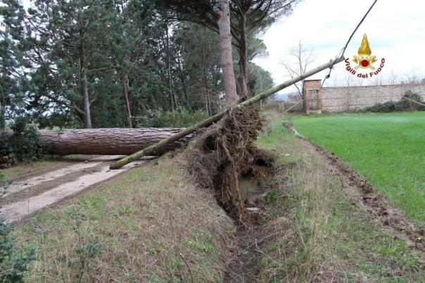 Maltempo Grosseto albero sradicato vento