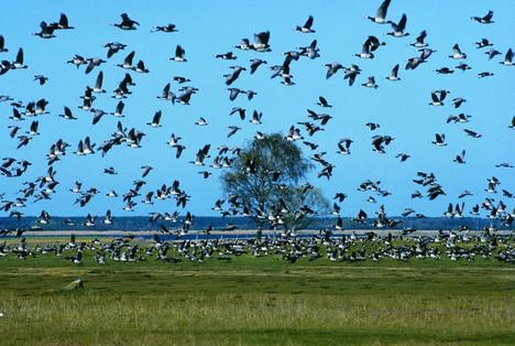 Bird_migration_mainstory1