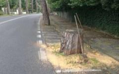 Firenze: viale Torricelli chiuso al traffico da oggi 1 febbraio (dalle 9 alle 16) per controlli agli alberi