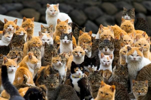 I gatti dell'isola giapponese di Aoshima, che ne ospita 6 per ogni abitante