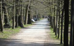 Viareggio: coppia di tedeschi rapinata in pineta. L'uomo, ferito,  è stato medicato in ospedale
