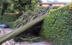 Maltempo: alberi abbattuti dal temporale a Fiesole. Un ferito ricoverato a Careggi