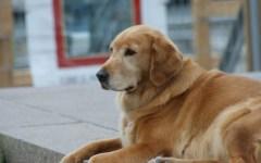 Prato: abbandona il cane in auto per giocare alle slot. Denunciato un cinese