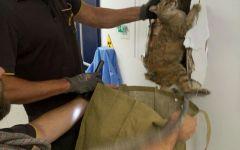 Firenze: gattino nella canna fumaria salvato dai vigili del fuoco