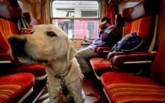 Ferrovie: cani in treno sempre più numerosi, rilasciati già oltre 28.000 biglietti
