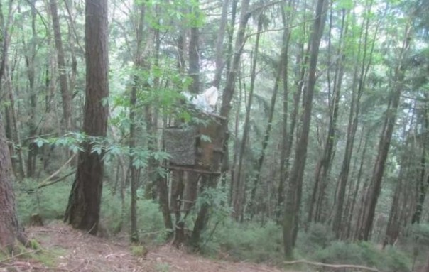 Capanno nel bosco, in Trentino. ANSA/UFF STAMPA M5s TRENTINO +++NO SALES, EDITORIAL USE ONLY+++