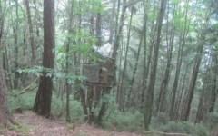 Sinalunga: 75enne cade dal tetto di un capanno e muore sul colpo