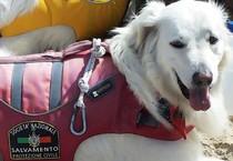 Follonica: cane-bagnino salva una turista in mare, davanti alla spiaggia di Pratoranieri