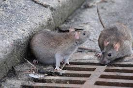 Topi vicino a un marciapiede