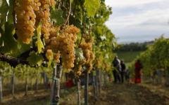 Toscana, fondi europei piano sviluppo rurale: già stanziati 624 milioni di euro