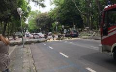 Viareggio: cade albero su un'auto in sosta, sfiorata la tragedia