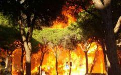Incendi in Toscana: stato d'emergenza proclamato dalla Regione. Grazie di cuore ai vigili del fuoco