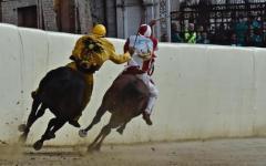 Palio di Siena: la Giraffa vince dopo un'ora di rinvii. Il cavallo della Tartuca non ha voluto correre