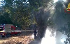 Pisa: a fuoco due piante nel Parco di san Rossore. Intervento dei vigili del fuoco