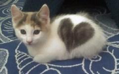 Firenze: all'Obihall l'Esposizione Internazionale Felina, coi gatti più belli e più rari