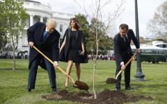 New York: morta la quercia dell'amicizia piantata da Trump e Macron alla Casa Bianca